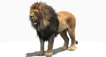 Lion (3D)