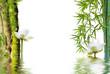composition aquatique zen, bambou à noeud et lotus