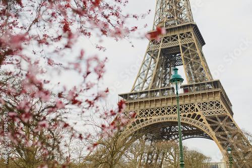 Cherry blossom season in Paris, France