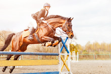 Bay Horse With Rider Girl Jump...