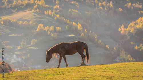 Photo  Sunrise and horse