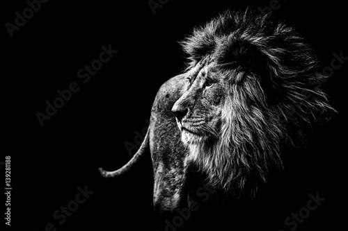 Obraz na płótnie Löwe in schwarz und weiß