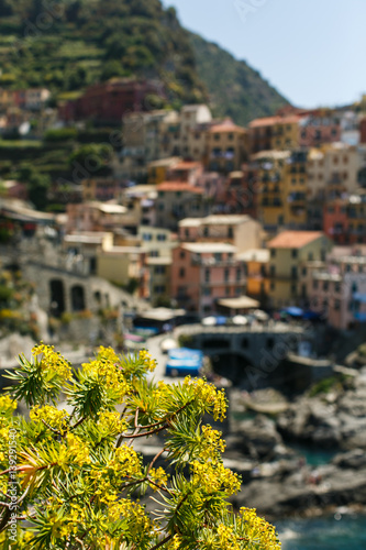Spoed Fotobehang Zalm Yellow flowers on the hill above Manarola in the Cinque Terre, Italy.