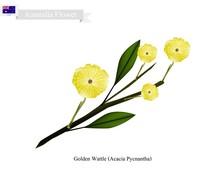 Golden Wattle, The National Fl...