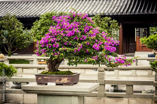 Spoed Fotobehang Bonsai Bonsai tree at a temple in Hong Kong