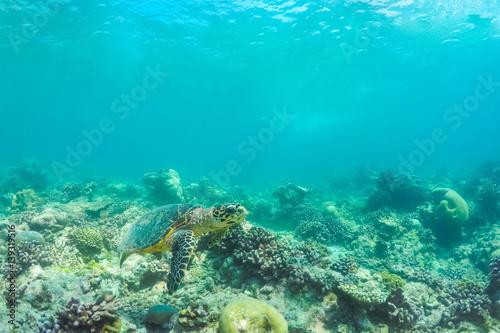 Staande foto Koraalriffen Underwater world landscape, underwater coral. Colorful coral reef and blue clear water with sunlight and sunbeam. Maldives underwater wildlife, marine life, adventure snorkeling.