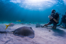 A Southern Stingray Watches A Scuba Diver Who Is Photographing It In The Shallow Blue Water Of Grand Cayman In The Caribbean. This Location Is A Popular Underwater Tourist Attraction For Snorkelers An