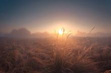 Beautiful Misty Sunrise Landsc...