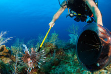 A Scuba Diver Hunts Underwater...