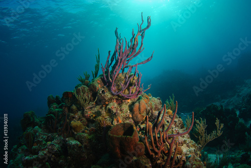 Fotobehang Koraalriffen Tropical reef with purple rope sponge reaching towards sunlight