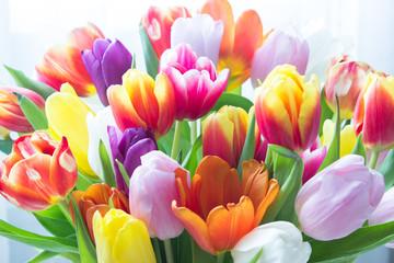 Panel Szklany Tulipany Mix of tulips flowers