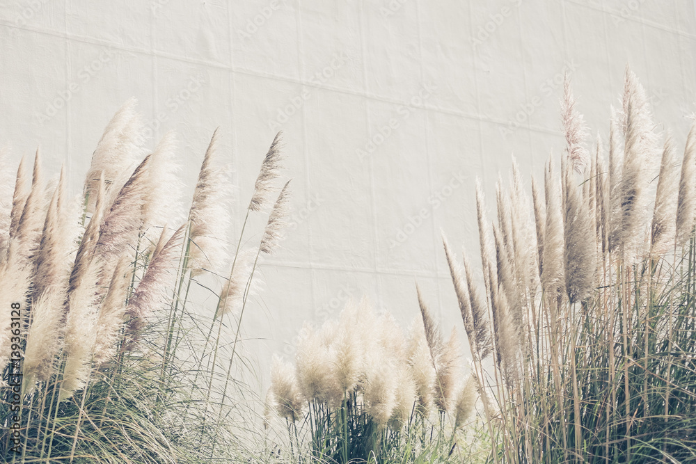 Fototapety, obrazy: Summer background reed grasses, vintage wallpaper with high grass