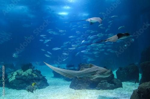 Papiers peints Recifs coralliens Fish in oceanarium in Lisbon Portugal