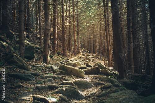 La pose en embrasure Route dans la forêt mystical forest road with stones