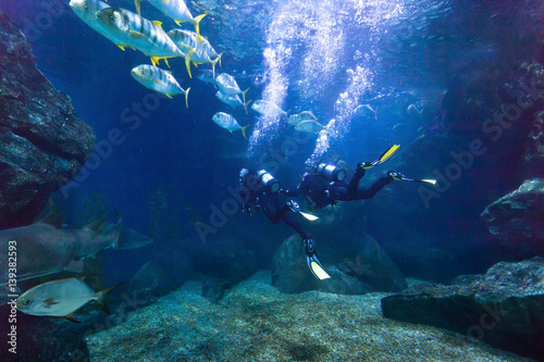 Fotobehang Duiken divers exploring fish underwater in the sea, beautiful diving background