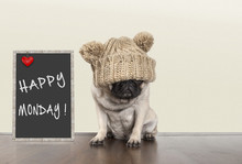 Cute Pug Puppy Dog With Bad Mo...