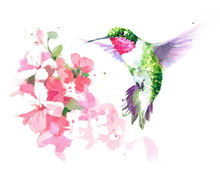 Watercolor Bird Hummingbird Fl...