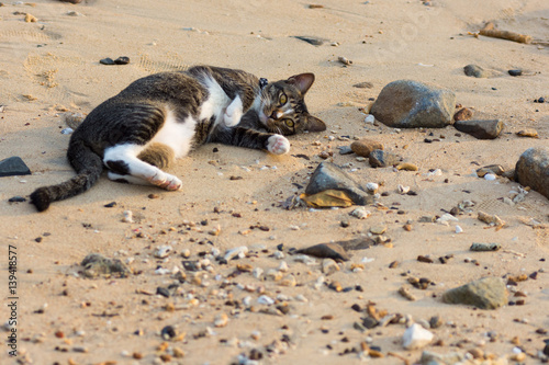 Photo  A playfull pet cat playing on sandy beach.