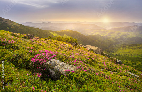 Poster Miel Spring landscape in mountains with Flower of a rhododendron