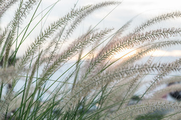 FototapetaFlowers, grass and sunlight evening.
