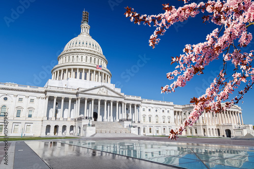US Capitol over blue sky with blooming cherry on foregraund