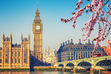 Fototapeta London - Big Ben and westminster bridge in London at spring