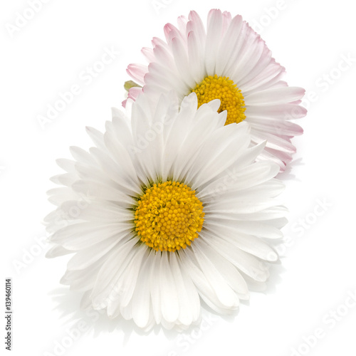 Staande foto Madeliefjes Beautiful daisy flowers isolated on white background cutout