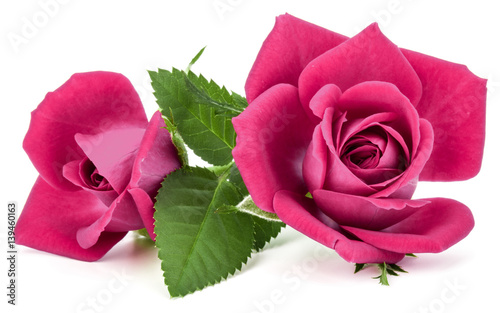 Fototapeta na wymiar pink rose flower bouquet isolated on white background cutout