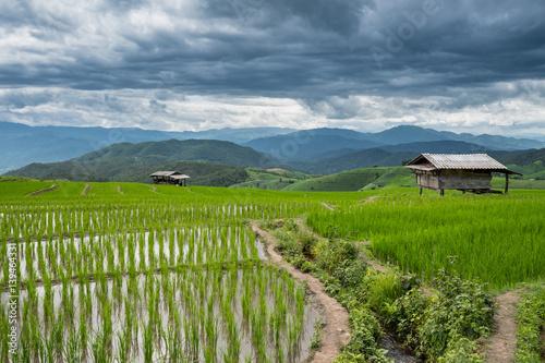 Poster Rijstvelden Green rice field in Chiang mai, Thailand.