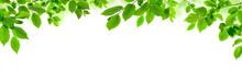 Grüne Blätter Auf Weiß Als ...