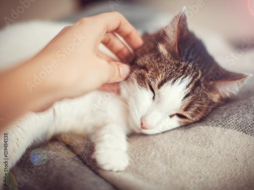 Fotografía  Woman petting a cat