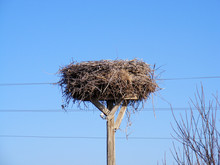 An Interesting Stork's Nest, A Stork's Nest Of Electricity,