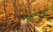 Tanawha Trail Bridge Off The Blue Ridge Parkway