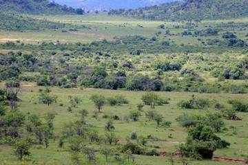 Sawanna w parku narodowym Pilanesber w Republice Południowej Afryki