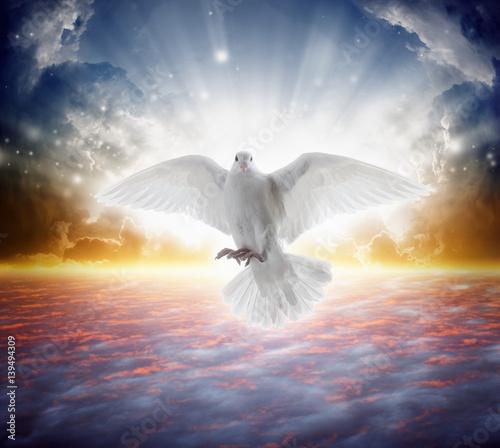 Valokuvatapetti Holy spirit bird flies in skies, bright light shines from heaven