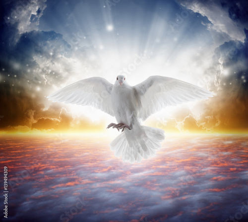 Vászonkép Holy spirit bird flies in skies, bright light shines from heaven