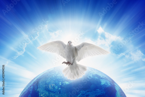 White dove symbol of love and peace flies above planet Earth Canvas-taulu
