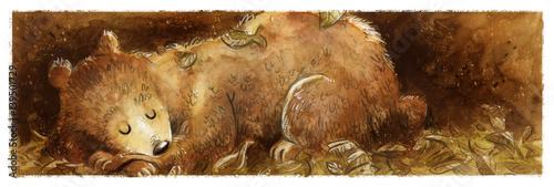 Fotografie, Obraz  oso durmiendo entre hojas
