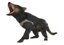 3D Rendering Tasmanian Devil On White