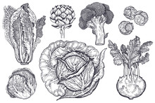 Various Types Of Cabbage Black And White Graphics.