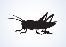 Grasshopper. Vector Drawing