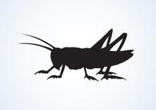 Grasshopper. Vector Drawing