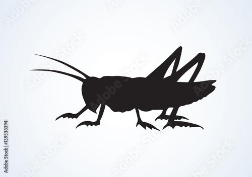 Fotografie, Tablou Grasshopper. Vector drawing