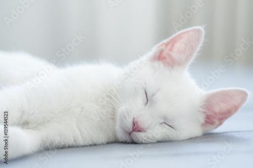 śpiący biały kot - fototapety na wymiar