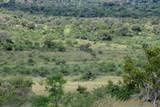 Fototapeta Sawanna - Sawanna w parku narodowym Pilanesberg