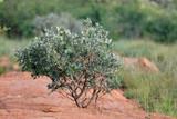 Fototapeta Sawanna - Drzewo wśród skał na sawannie