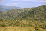 Fototapeta Sawanna - Afrykańska sawanna w parku narodowym Pilanesberg