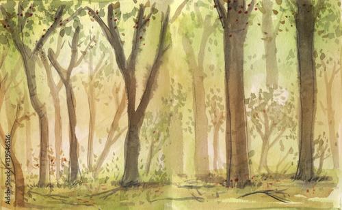 bosque en acuarela