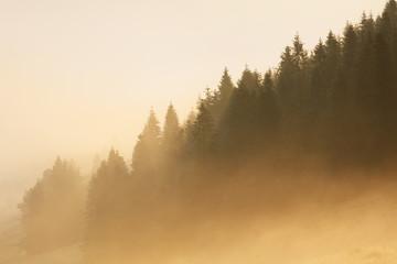 Obraz Sunlight on Forest with fog