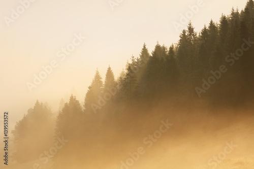 swiatlo-sloneczne-w-lesie-z-mgla